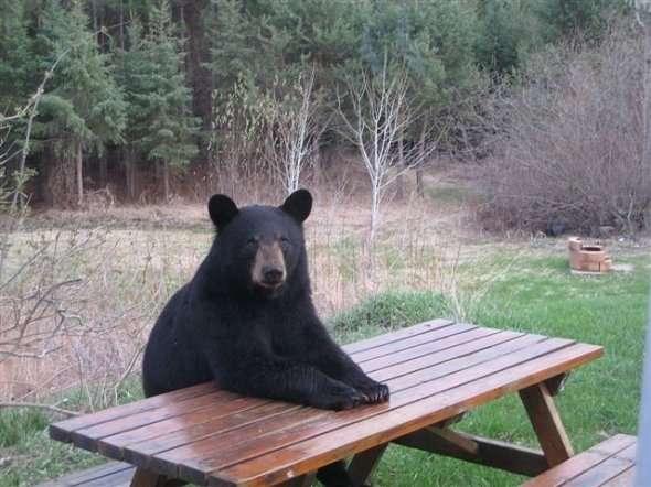 Welfare State Bear